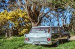 KangarooBoogaloo-CrcooperPhotography-50