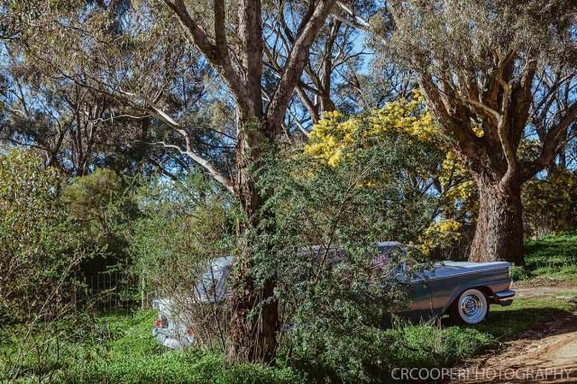 KangarooBoogaloo-CrcooperPhotography-51