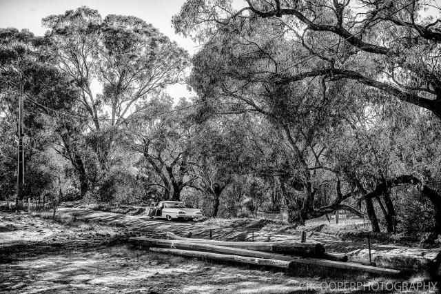 KangarooBoogaloo-CrcooperPhotography-52