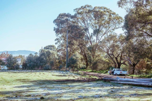 KangarooBoogaloo-CrcooperPhotography-53