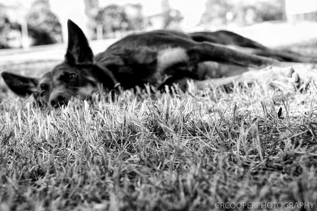 Nate & Sj-PostCeremony-LowRes-CrcooperPhotography-028