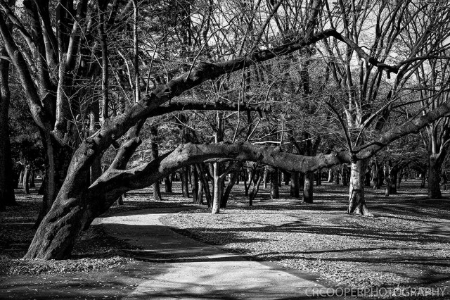 MooneyesJapan-Day5-CrcooperPhotography-028 copy